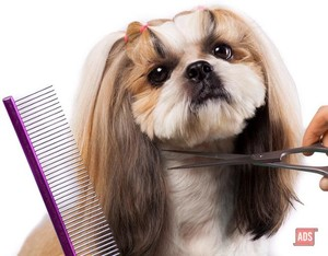 Pawgeous Mobile Dog Grooming